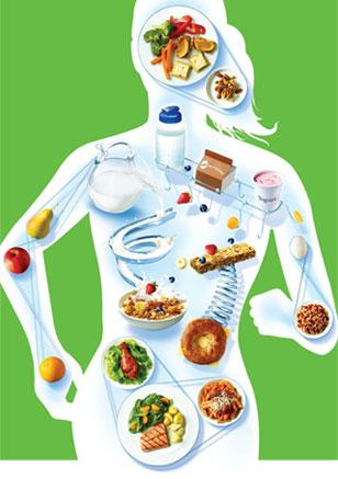 Nutrition et corps humain